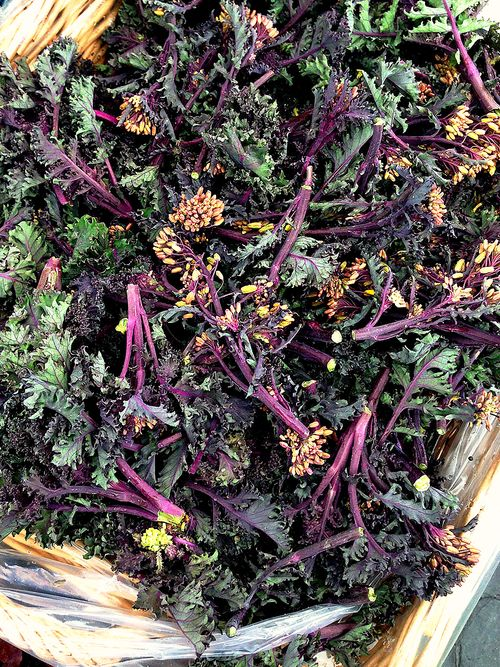 Farmers Market Blossoming Purple Curly Kale