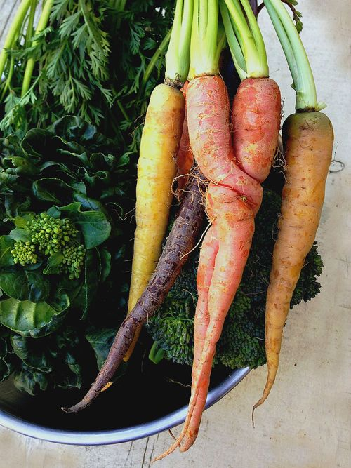 Farmers market Heirloom carrots