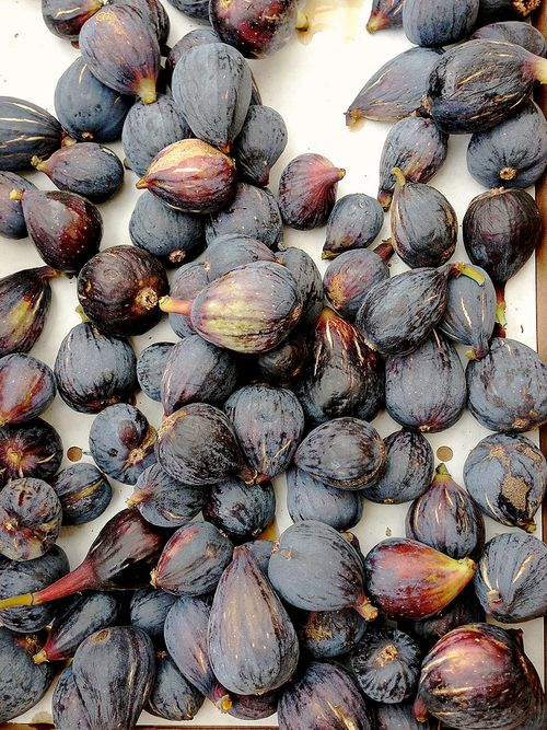 Farmers Market Black Mission Figs