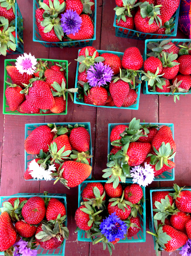 Organic strawberries flowers top